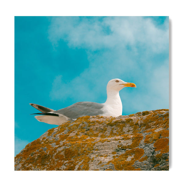 Seagull In Colours - Art Prints by Post Collective - 1