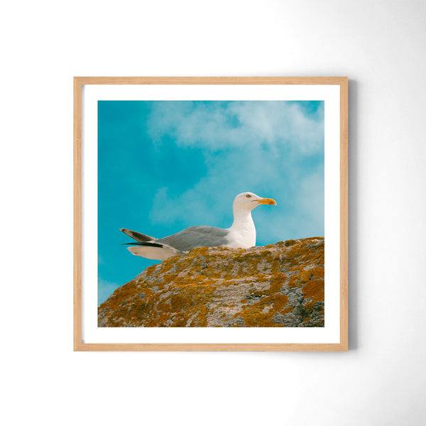 Seagull In Colours - Art Prints by Post Collective - 3