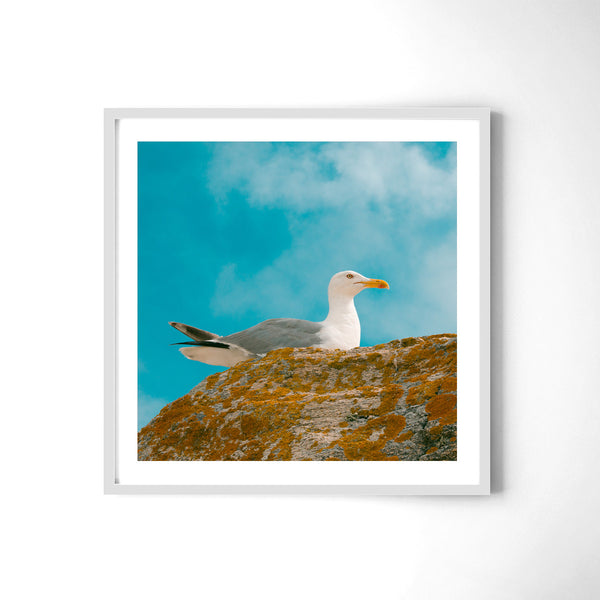 Seagull In Colours - Art Prints by Post Collective - 4