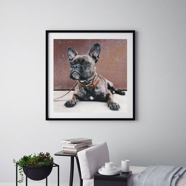 The French Bulldog - Art Prints by Post Collective - 5