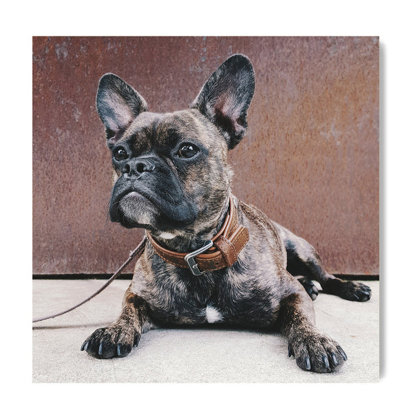 The French Bulldog - Art Prints by Post Collective - 1