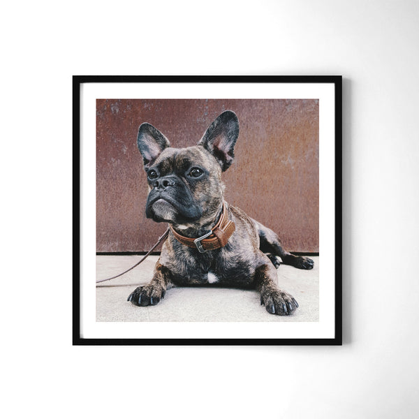 The French Bulldog - Art Prints by Post Collective - 2