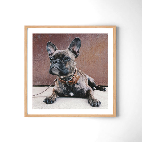 The French Bulldog - Art Prints by Post Collective - 3