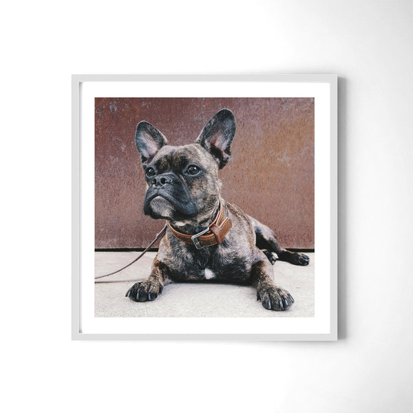 The French Bulldog - Art Prints by Post Collective - 4