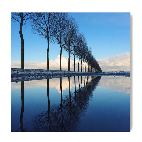 Trees Aligned - Art Prints by Post Collective - 1