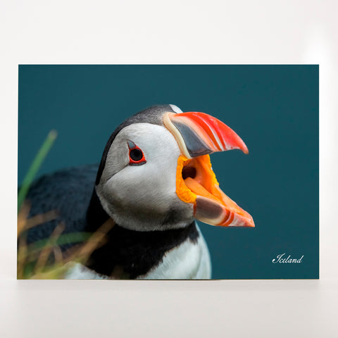 Picture Postcard - Puffin