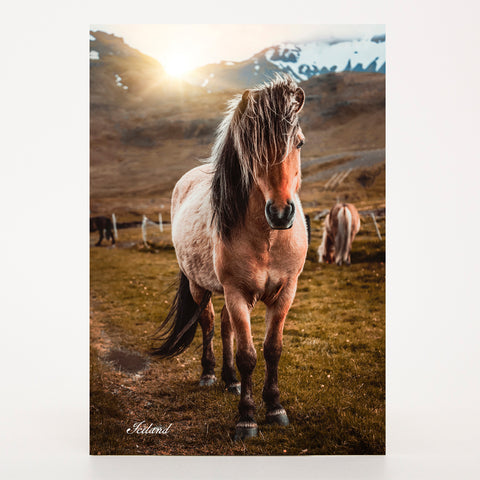 Picture Postcard - Horse