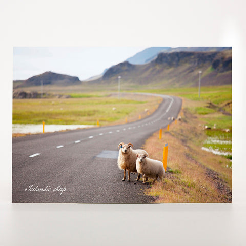 Picture Postcard - Sheep On The Road