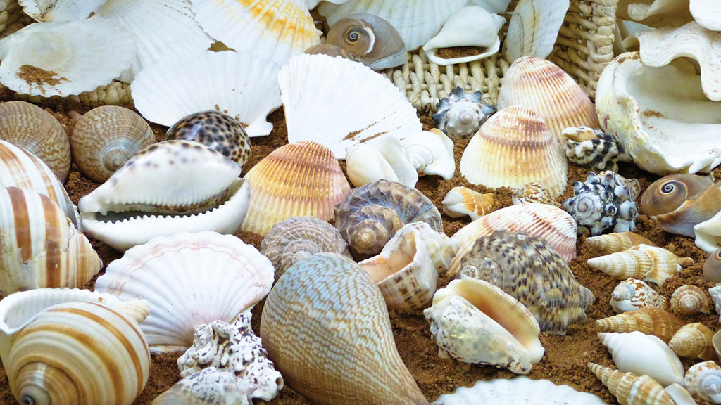Shell Treasure Basket