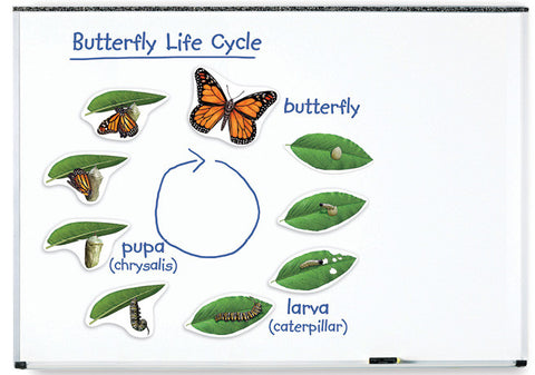 Magnetic Butterfly Life Cycle pk9