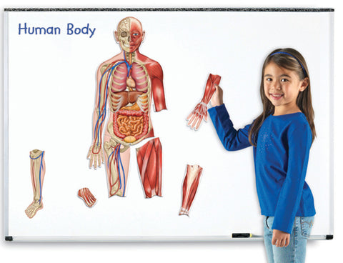 Magnetic Human Body pk17