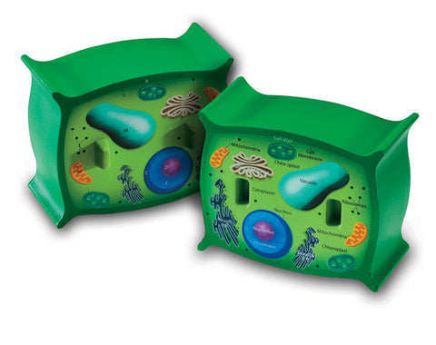 Plant Cell Foam Cross-Section