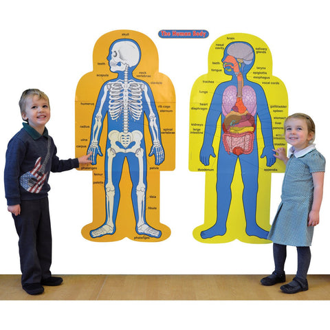 Human-Body-Bulletin-Board-Set-