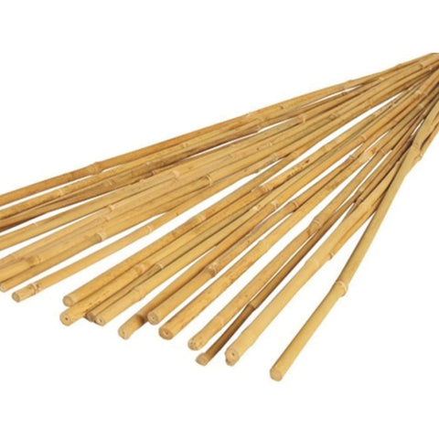 Bamboo-Canes-pk-20