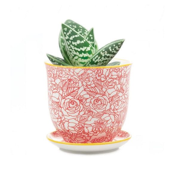 Rose Liberte Mini-Planter