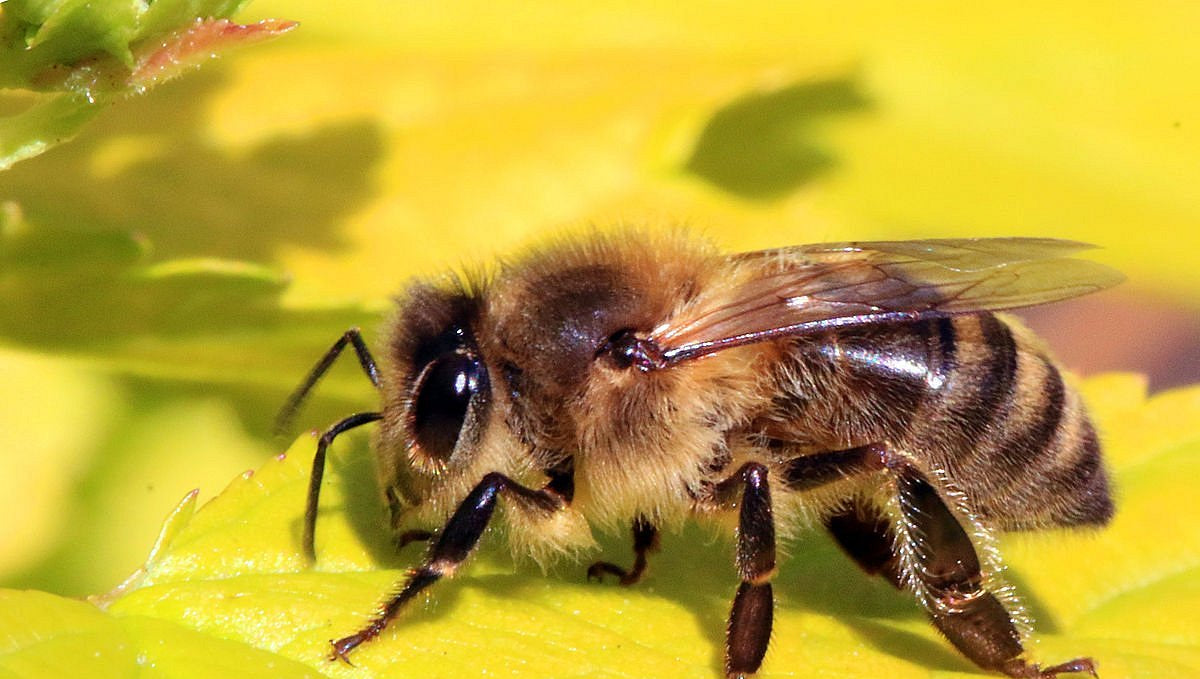 April 2020 Bee Update