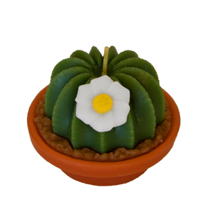 Arizona Cactus Candles - Armadilla Wax Works Candle Factory Store