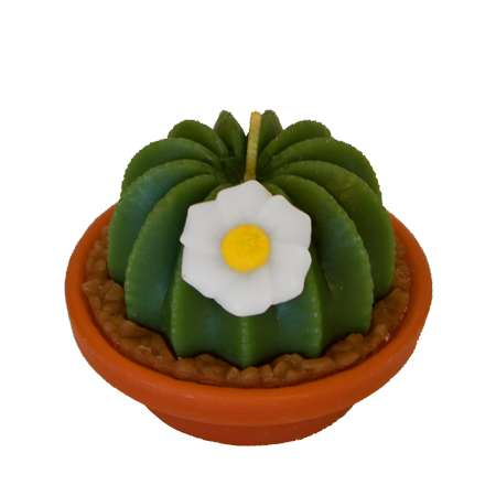 Arizona Cactus Candles - Candle Factory Store