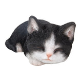 Sleeping Black & White Kitten