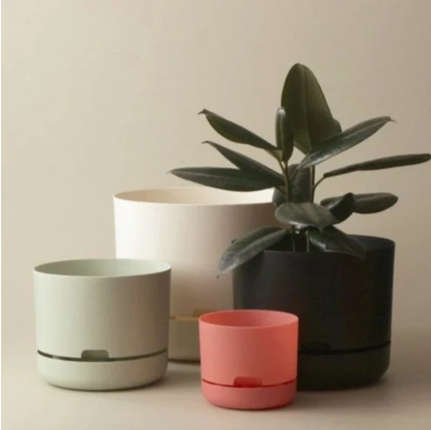 Shop Mr Kitly Pots in Sydney at The Corner Booth