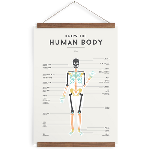 Human Body We Are Squared Poster at The Corner Booth
