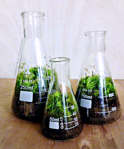 Conical science flasks as terrariums at The Corner Booth