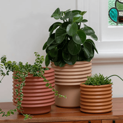 Berlin Planter Medium