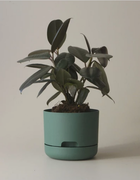 Mr Kitly Decor Self Watering Pot Plant-Medium