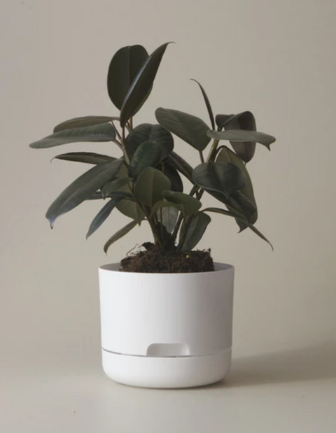 Mr Kitly Decor Self Watering Pot Plant-Large
