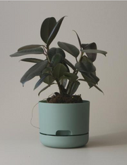 Mr Kitly Decor Self Watering Plant Pot -Small