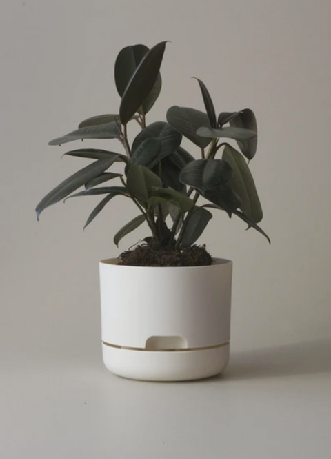 Mr Kitly Decor Self Watering Plant Pot -Small *