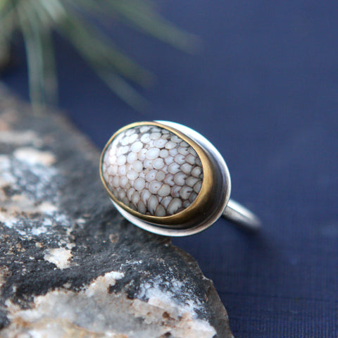 Snakeskin Agate Ring - Fossilized Fish Toothplate - Genuine Fossil and Sterling Silver - Size 7.5