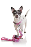 Neoprene Dog Collar - Toto