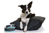 DOOG Home Bed - Sleep, Eat, Chase, Repeat *NEW*