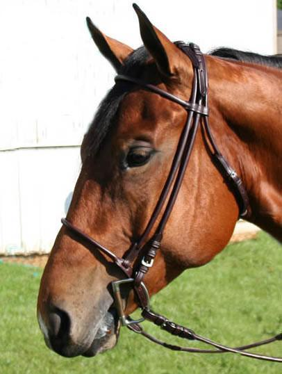 Rolled Leather Horse Bridles / Bridle