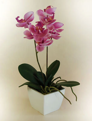 Pink Mini Orchid in a Pot