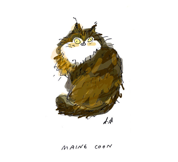 Maine Coon Cat Print