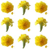 Marigold Small, Yellow, 24 Pcs, $12.5 Cad