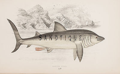 Antique Fish Prints