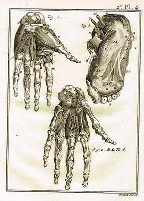 Antique Medical Print