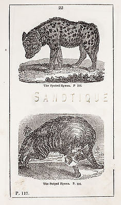 """HISTORY OF THE EARTH"" by Goldsmith - 1810 - THE SPOTTED HYAENA & STRIPED HYAENA - Sandtique-Rare-Prints and Maps"