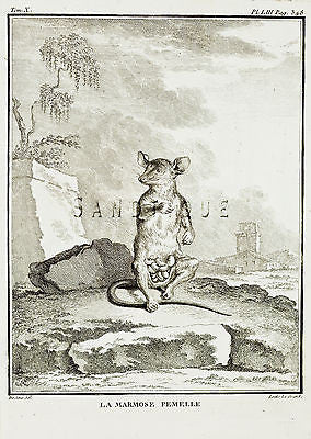 "De Seve's Animals - ""LE MARMOSE FEMELLE"" - Copper Engraving - 1760"