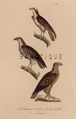 BUFFON'S ANTIQUE BIRDS