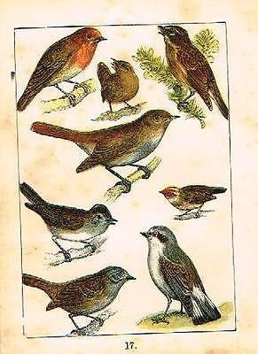 BUFFON'S ANTIQUE BIRD PRINTS