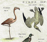 "Issac Taylor's Birds - ""BIRDS Tab. II"" - Hand-Colored Engraving -1789"