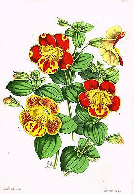 "Andrew's ""The Floral Magazine - ""PLATE 157"" - Hand Colored Litho - 1867"
