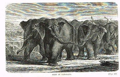 Hunting Grounds - HERD OF ELEPHANTS - Woodcut - 1868