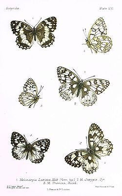 SANDTIQUE ANTIQUE BUTTERFLY PRINTS