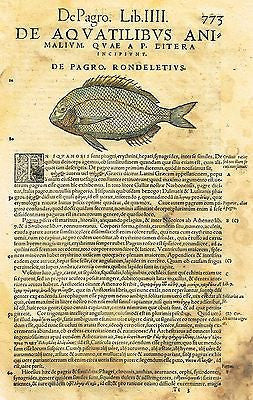 "Gesner's Fish  - ""DE PAGRO, RONDELETIVS"" - Hand Colored Eng - 1558"