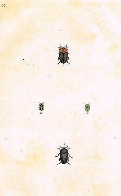 SANDTIQUE ANTIQUE INSECT  PRINT